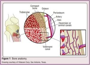 IO anatomy